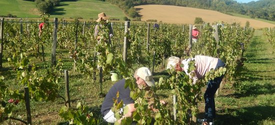 Photo : Viticulture, Ariège, Pamiers